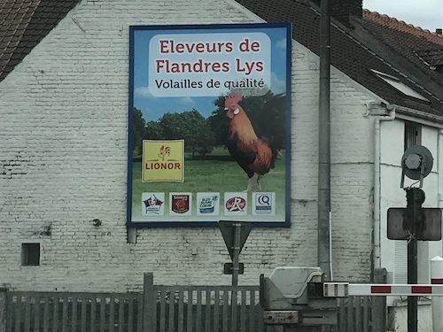 Affiche éleveur de Flandres